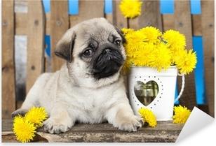pug puppy and spring dandelions flowers Pixerstick Sticker