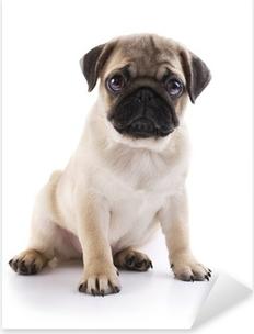 Pug puppy Pixerstick Sticker