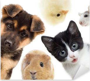 Puppy and kitten and guinea pig Pixerstick Sticker