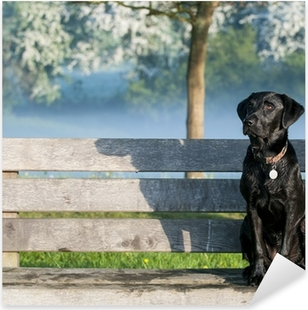 Pixerstick Sticker Puppy labrador op de bank