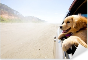 Puppy looking out the window of a car Pixerstick Sticker