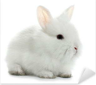 Rabbit bunny baby isolated on white background Pixerstick Sticker