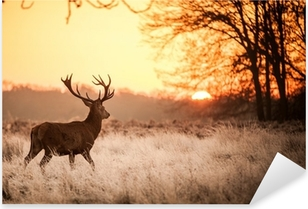 Pixerstick Sticker Red Deer in de ochtend zon.