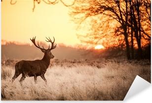 Red Deer in Morning Sun. Pixerstick Sticker