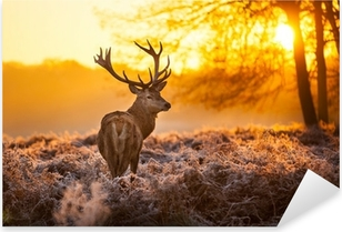 Red Deer in the morning sun Pixerstick Sticker