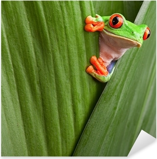 red eyed tree frog Pixerstick Sticker