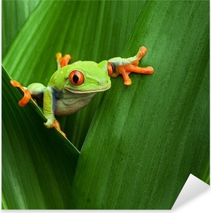 Sticker Pixerstick Red eyed tree frog