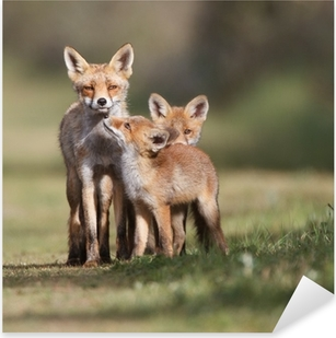 Red fox family Pixerstick Sticker
