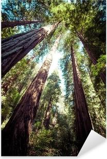redwood national park in california, usa Pixerstick Sticker