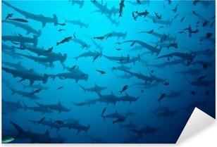 Sticker Pixerstick Requin marteau dans le secteur bancaire, Galapagos