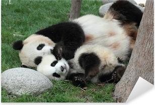 Pixerstick Sticker Reuzenpanda met zijn cub Slapen op het gras