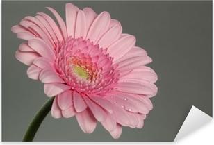 Pixerstick Sticker Roze gerbera daisy met ochtenddauw