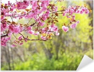 Sticker Pixerstick Sakura. Cherry Blossom dans le printemps