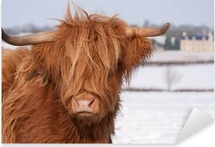 Scottish highland cow Pixerstick Sticker