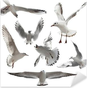 Seagulls Isolated Pixerstick Sticker