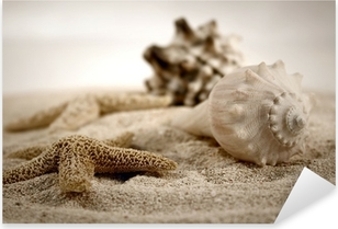 seashells on the sand Pixerstick Sticker