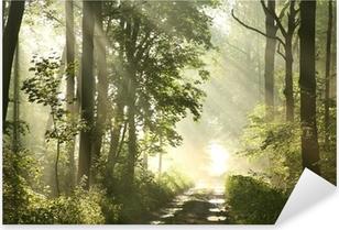 Sticker Pixerstick Sentier de la forêt sur un matin brumeux de printemps après la pluie