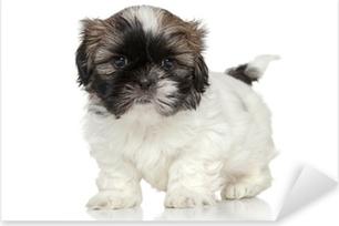 Pixerstick Sticker Shih Tzu puppy portret