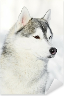 Pixerstick Sticker Siberisch schor hondportret bij de winter
