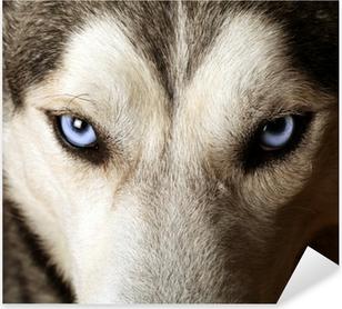 Pixerstick Sticker Sluit het oog op de blauwe ogen van een husky of Eskimo hond.