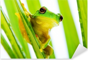 Small green tree frog holding on palm tree Pixerstick Sticker