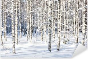 Snowy birch trunks Pixerstick Sticker