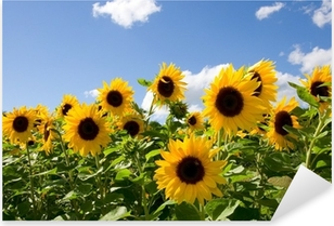 Sonnenblumen Pixerstick Sticker