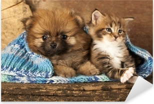 Pixerstick Sticker Spitz puppy en kitten rassen Maine Coon, kat en hond