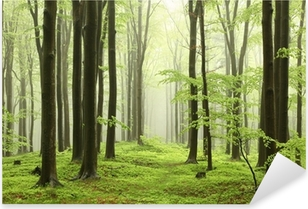 Spring beech forest in the mountains Pixerstick Sticker
