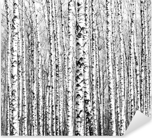 Spring trunks of birch trees black and white Pixerstick Sticker