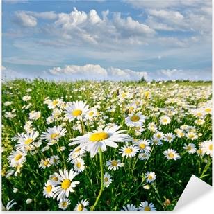 Pixerstick Sticker Springtime: gebied van daisy bloemen met blauwe lucht en de wolken