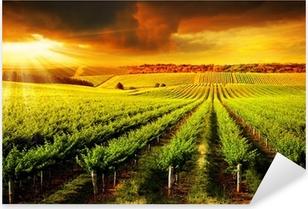 Pixerstick Sticker Stunning Vineyard Sunset