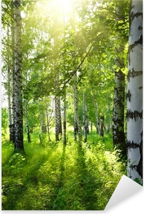 summer birch woods with sun Pixerstick Sticker