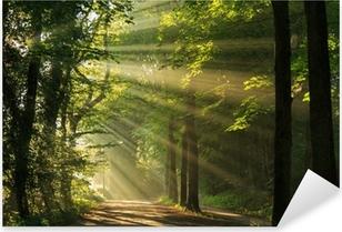 Sun rays shining through the forest Pixerstick Sticker