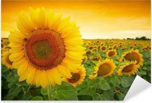 Sunflower field Pixerstick Sticker