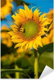 Pixerstick Sticker Sunflower