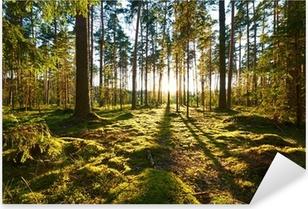 Sunrise in the pine forest Pixerstick Sticker