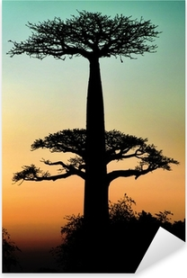 Sunset and baobabs trees Pixerstick Sticker