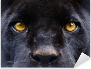 the eyes of a black panther Pixerstick Sticker