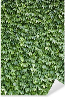 The wall brick covered by green leaves Pixerstick Sticker
