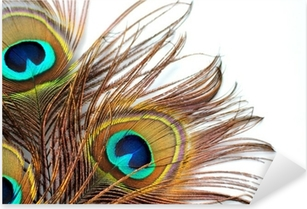 Three peacock feathers Pixerstick Sticker