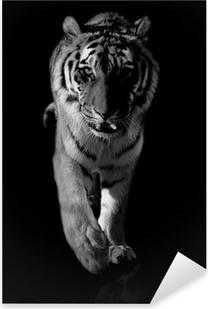 tiger black and white Pixerstick Sticker