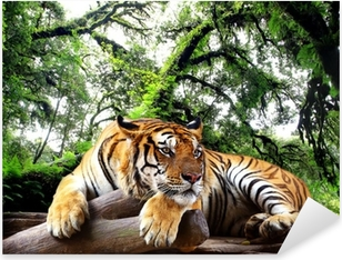 Tiger looking something on the rock in tropical evergreen forest Pixerstick Sticker