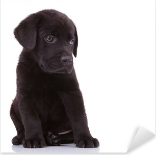 Sticker Pixerstick Timide labrador retriever chiot