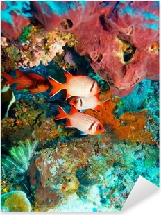 Tropical Fishes near Colorful Coral Reef Pixerstick Sticker