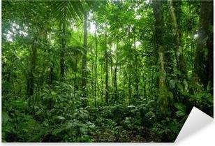 Tropical Rainforest Landscape, Amazon Pixerstick Sticker