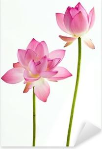 Pixerstick Sticker Twain roze waterlelie bloem (lotus) en witte achtergrond.