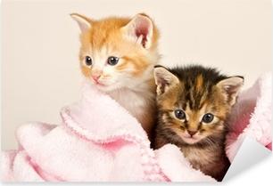 Pixerstick Sticker Twee katjes in een roze deken