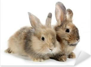 Pixerstick Sticker Twee konijnen konijntjes op wit wordt geïsoleerd