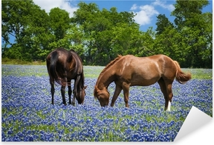 Two horses grazing in the bluebonnet pasture in Texas spring Pixerstick Sticker